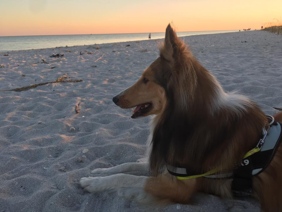 Eleven Of Our Favorite Dog Friendly Beaches Parks In Authentic Florida