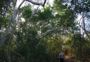 Photo of Mound Key Archaeological State Park in Estero Florida
