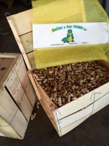 Photo of Peanuts from Seiler Farms in Ocala Florida