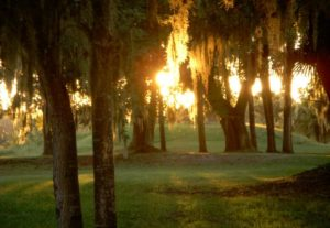 Photo of Crystal River Archaeological State Park in Crystal River Florida