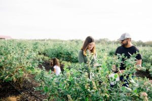 Photo of blueberry picking at Southern Hill Farms