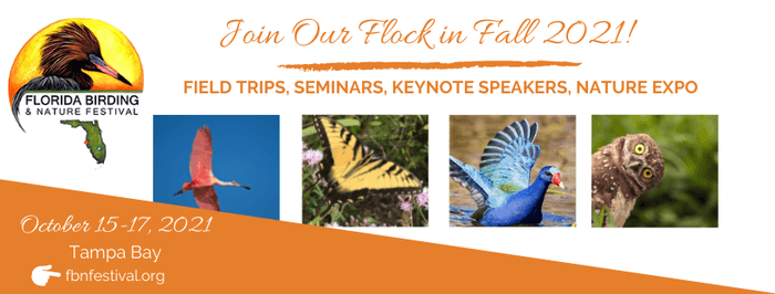 Advertisement for the Florida Birding and Nature Festival