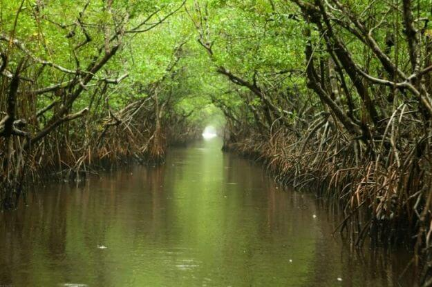 Photo of the Everglades and Turner River