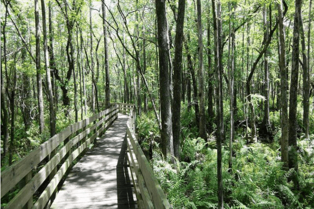 Photo of the Six Mile Cypress Slough Preserve