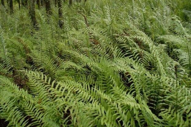 Photo of ferns in Tarpon Springs